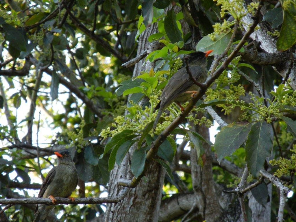 Piepmätze im Tropenwald