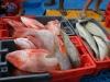 Frische Fänge von der Fishing Competition