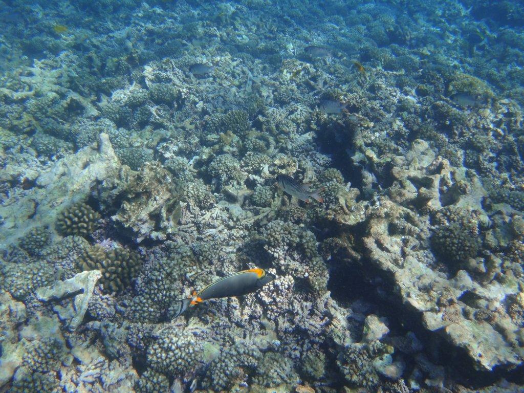 Schnorcheln bei Coco Island